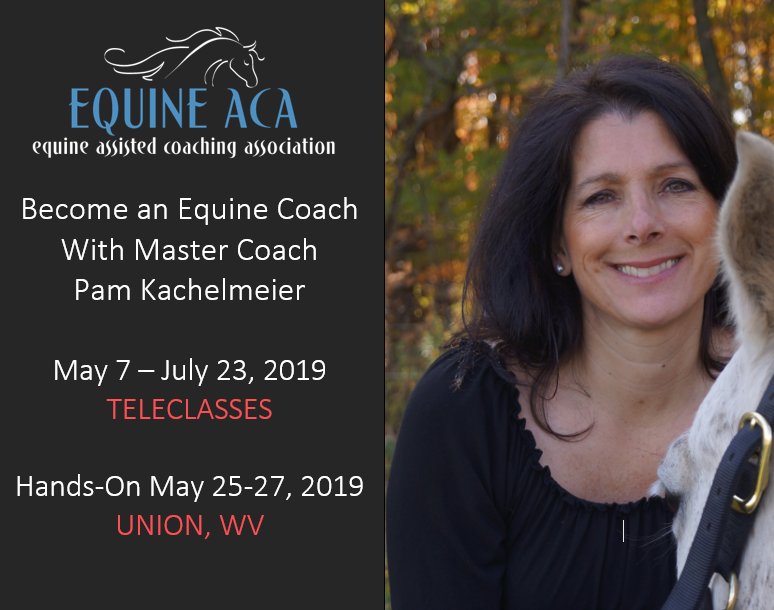 Equine Assisted Coaching Training